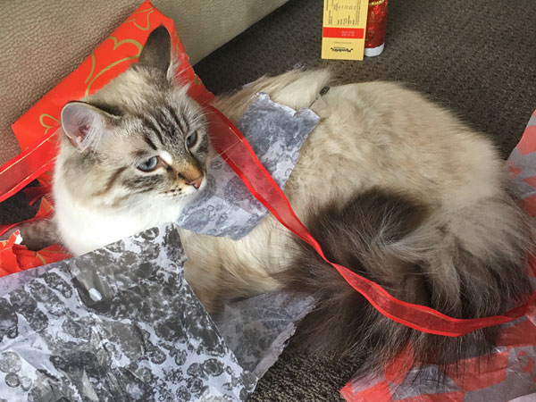 Milo enjoying Christmas 2017