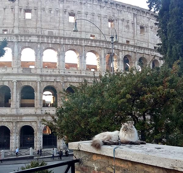 Siberian kitten Beth, visiting Rome