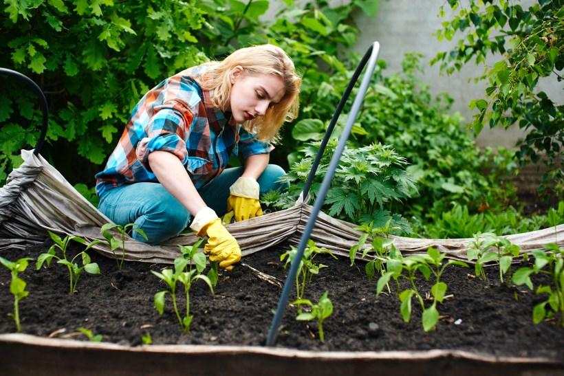 basic gardening.jpg