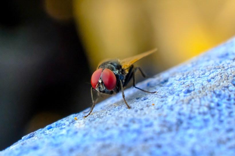 flies.jpg