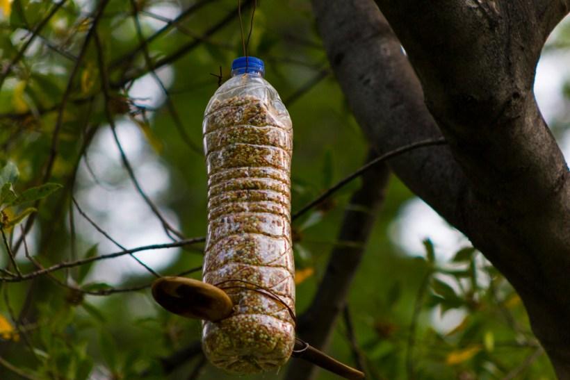 diy bird feeders.jpg