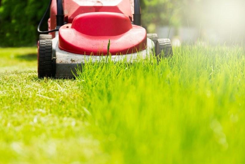 mow lawn