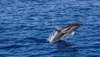 Experience wild bottlenose dolphins in Western Australia