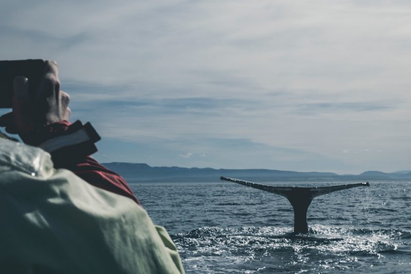 Man photographing whale on volunteer project