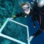 A woman in a black wetsuit is scuba diving and holding a white, square frame used for surveying coral reefs.