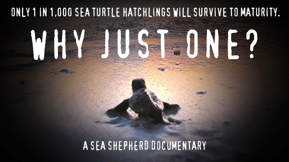Watch Why Just One? - a marine conservation documentary about turtles