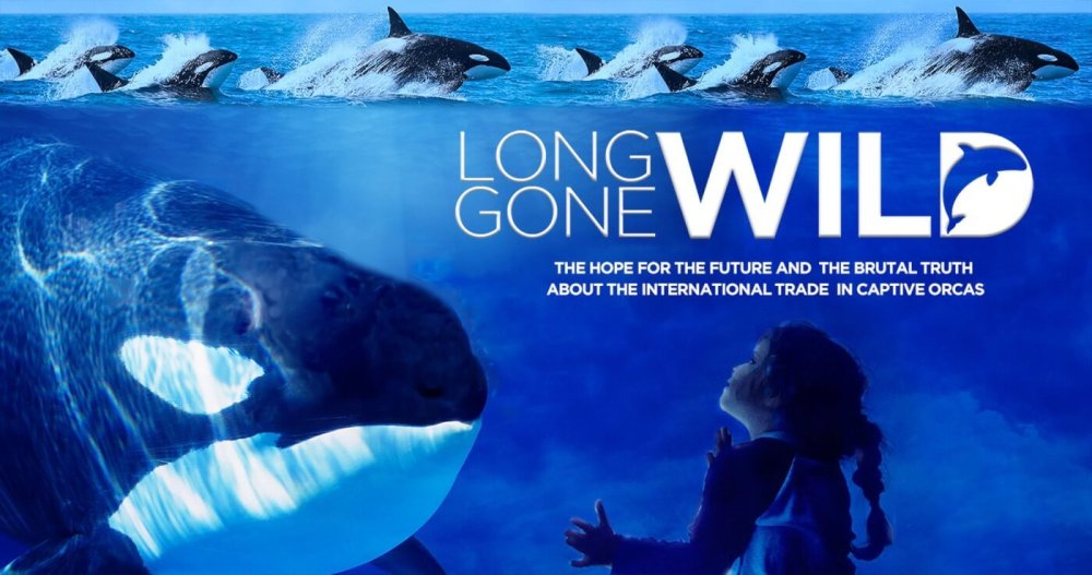 Long Gone Wild - an orca documentary