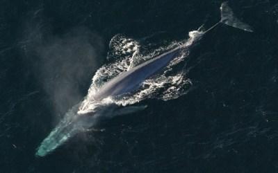 10 Positive Ocean News Stories from June 2020