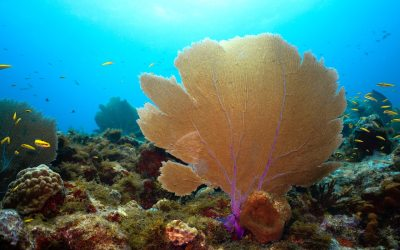 12 reasons sea fans are awesome.