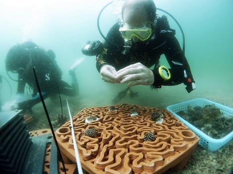 3d-printed-coral - The University of Hong Kong