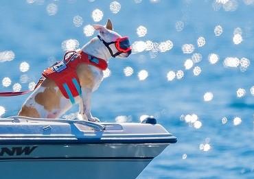 whale poop sniffing dog - Conservation Canines on boat - Dr. Deborah Giles