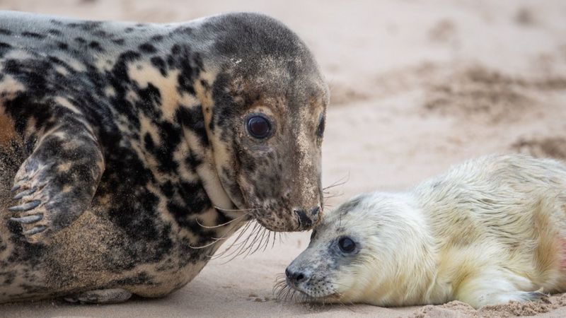 seal - mother and pup