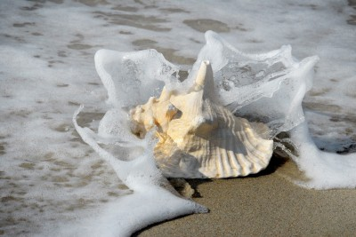 Conch shell laying near the ocean. Twitter business engagement is built by sharing the shell!