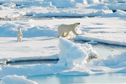 A polar bear and cub walking on sea ice