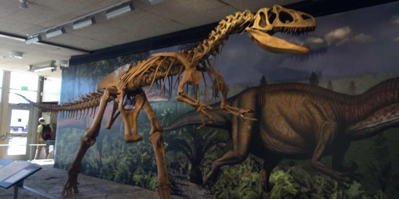 Dinosaur National Monument Park, Utah