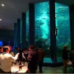 東海大学海洋水族館の大水槽