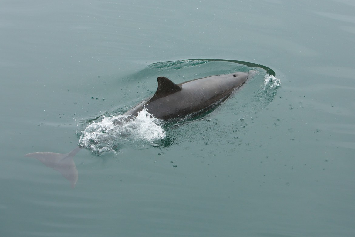 bottlenose dolphin spotting in Scotland