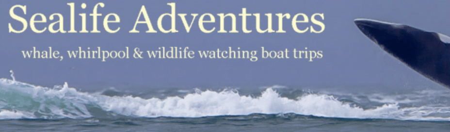 Sealife Adventures banner with whale