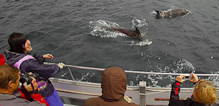 Sealife Adventures happy people watching dolphins on the boat