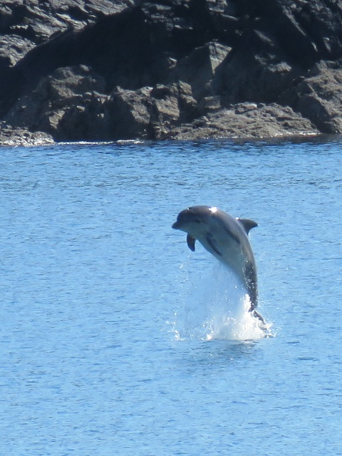 Dolphin_18..4.15_easdale_bay