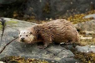 otter-blog