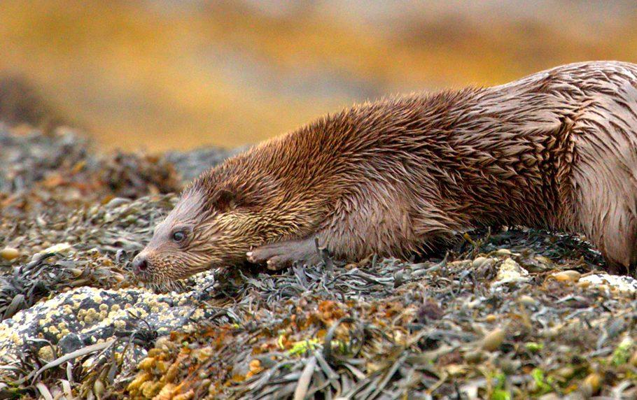 Sealife Adventures otter looks downwards