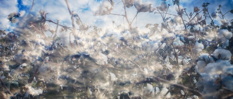 Image of clouds and cotton together to create a new context to images.