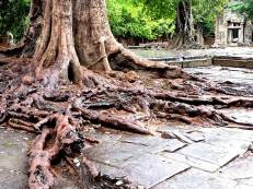 Roots of a 300-year old tree form part of the temple