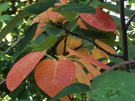 Leaves in my tree- too early!