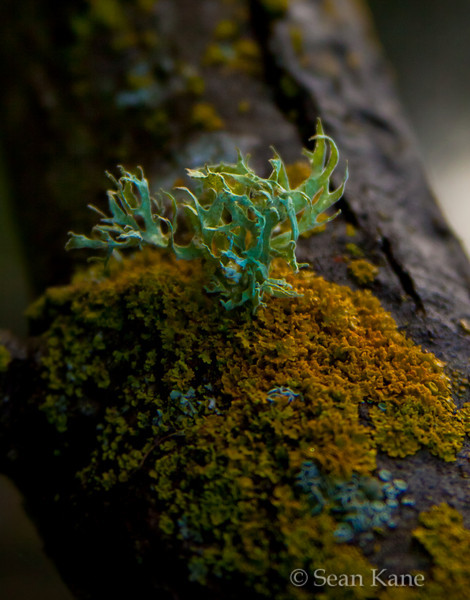 Lichen in the Morning