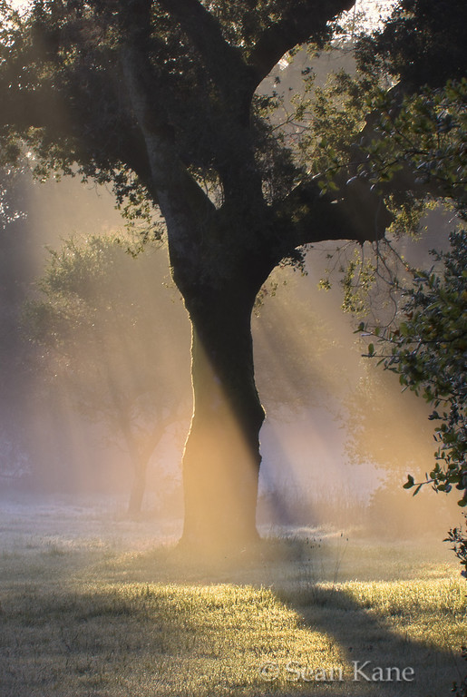Sunrise Captured by Fog and Tree