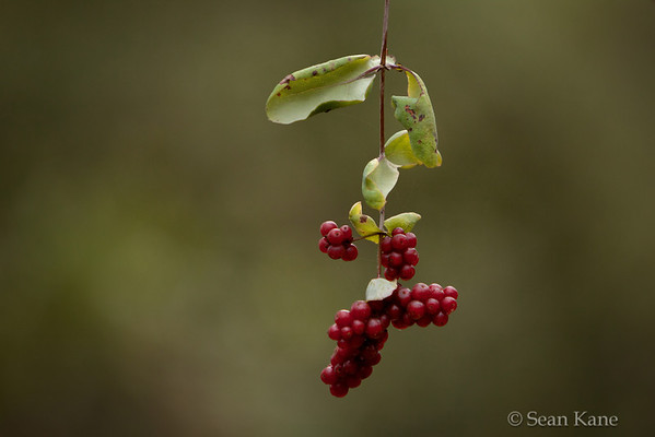 Weathered Twig & Berries