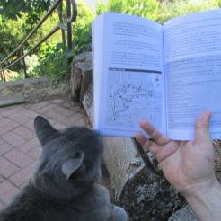 Buzz the Cat helping a tourist with directions