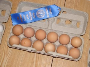 eggs_ACIM