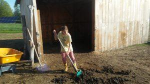 mucking the pasture