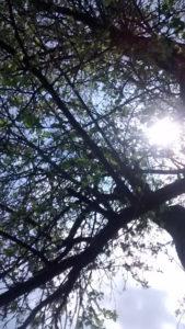 light_apple_tree