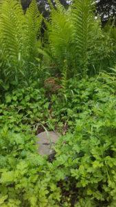 garden_rock