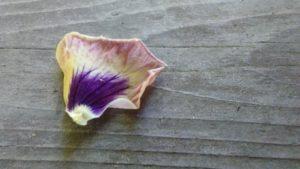 fallen_petals