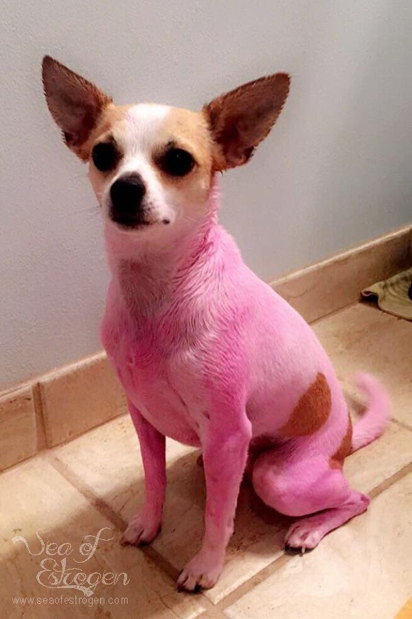 pinkpip