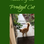 Return of the Prodigal Cat