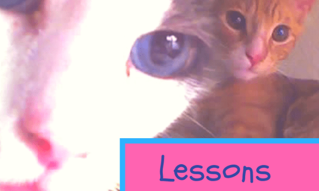 Three Things I Learned From My Cats