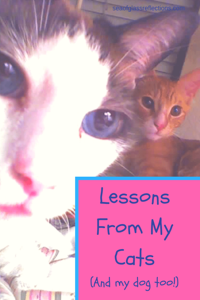 What I learned from my pets