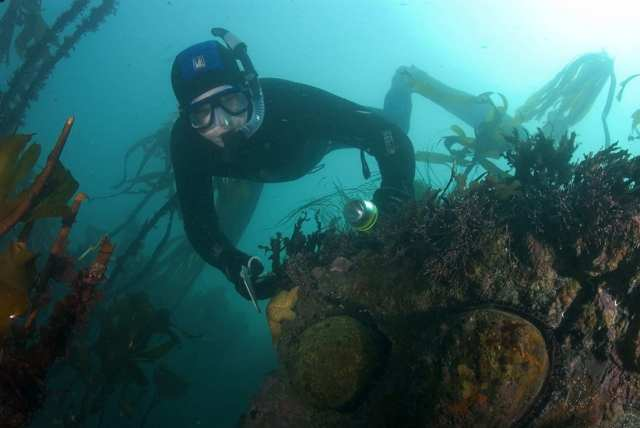 trophy abalone diving