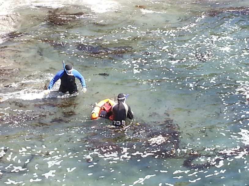 abalone , Abalone Bay, Sea Ranch