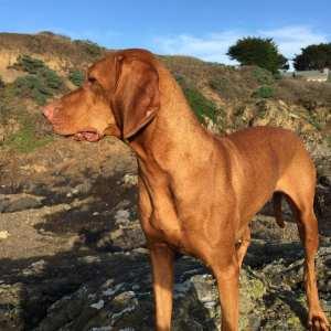dog day, Sea Ranch, Abalone Bay,