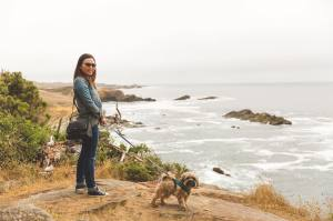 Dog Day, Sea Ranch, digital virtual tours
