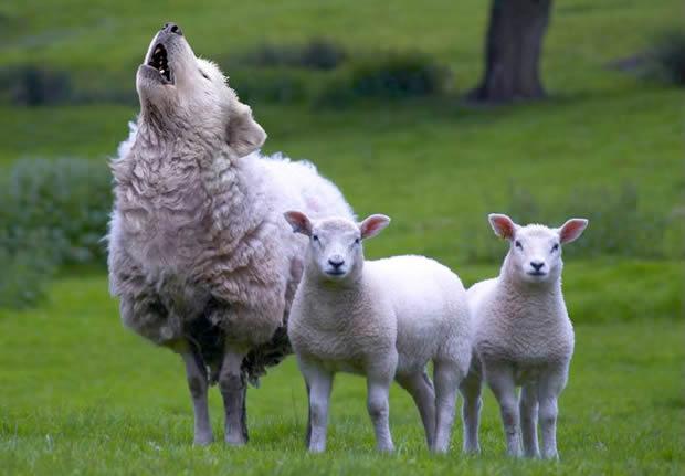 Profetas e Profecias: Cuidado com o espírito de engano