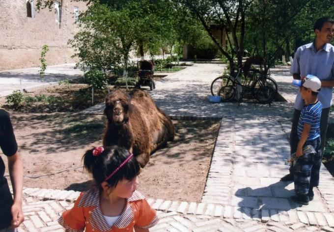 記念撮影用のラクダ