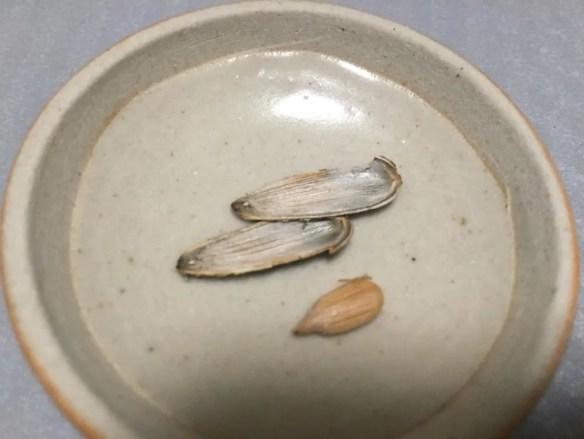 ベトナムお土産 ひまわりの種
