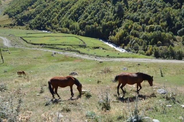 ウシュグリ村への風景(メスティアから車でウシュグリ村へ)【ジョージア(グルジア)Georgia:საქართველო】